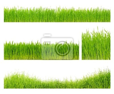 Wall mural Different  grass