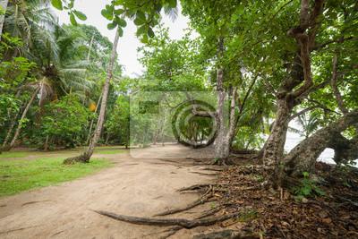 Dirt road in tropical forest near beach