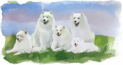 Wall mural Dog husky