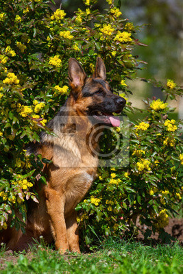 Dog sitting in park in flowers