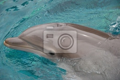 dolphin coming to surface