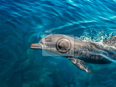 Wall mural Dolphin in the clear sea water