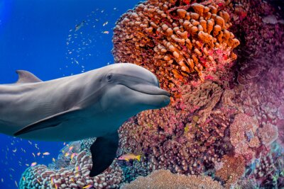 Wall mural dolphin underwater on reef background