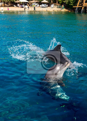 Dolphins frolic near the beach