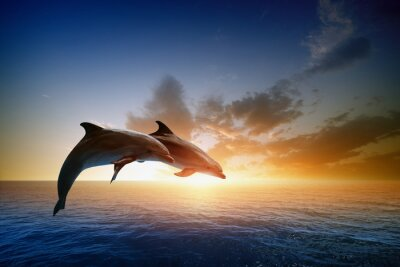 Wall mural Dolphins jumping