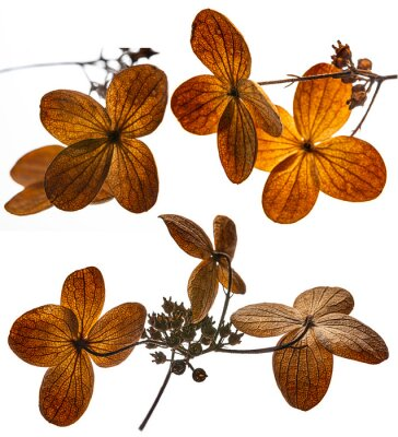 dried flower close up - an autumnal picture