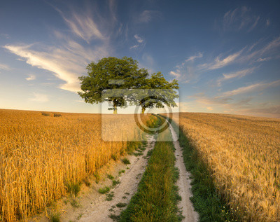 Droga wiejska prowadząca przez pole dojrzałego  zboża