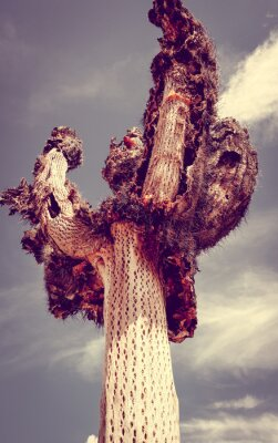 Wall mural Dry giant cactus in the desert, Argentina