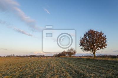 Drzewa na wiosennym polu