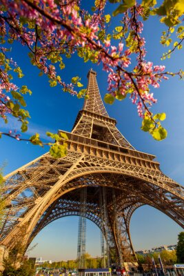 Wall mural Eiffel Tower during spring time in Paris, France