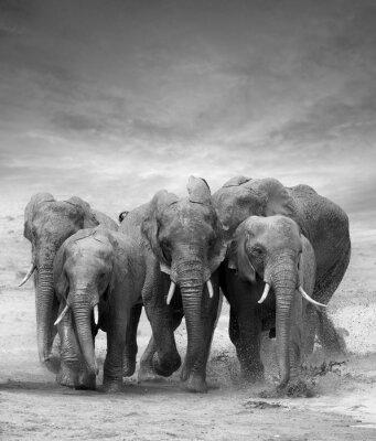 Wall mural Elephant