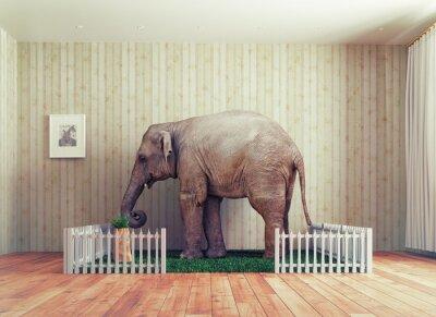 Wall mural Elephant calf - pet
