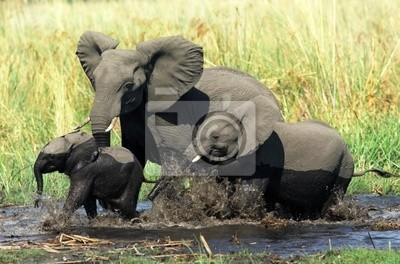 Elephant family in Okavango delta