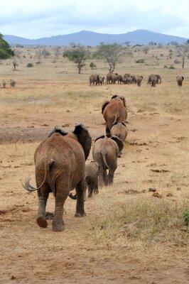 Wall mural Elephant in National park of Kenya