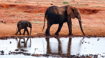 Wall mural Elephant in Tsavo East National Park