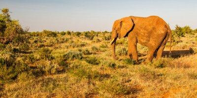 Wall mural Elephant in Tsavo East National Park, Kenya