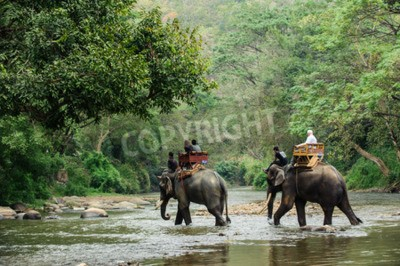 Wall mural Elephant trekking through jungle in northern Thailand