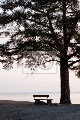 Wall mural empty bench and big tree silhouette viewing to a lake