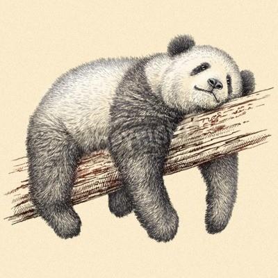 Wall mural engrave isolated panda bear illustration sketch. linear art
