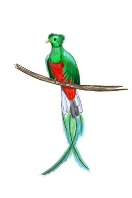 Wall mural Exotic colorful bird with long tail