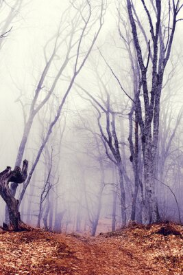 Wall mural fantastic dark forest with fog