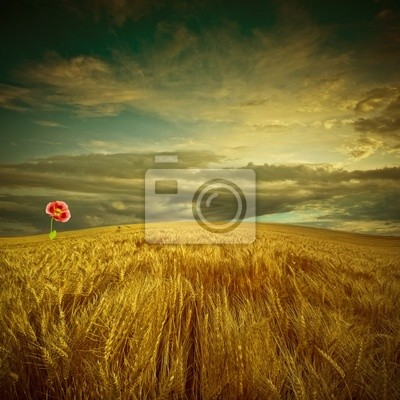 Wall mural fantastic landscape with golden field and poppy flower