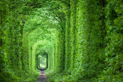 Wall mural Fantastic Real Tunnel of Love, green trees and the railroad
