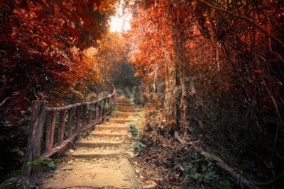 Wall mural Fantasy forest in autumn surreal colors. Road path way through dense trees. Concept landscape for mysterious background
