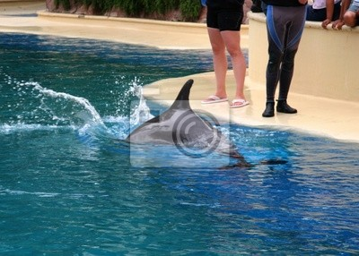 fast thinker dolphin