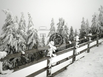 Fence and Snowy Trees