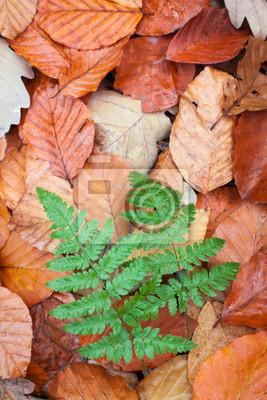 Wall mural ferns in beech leaves