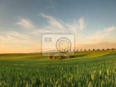 Wall mural field in spring