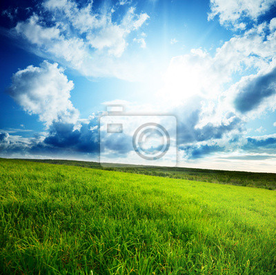field of spring grass and sun