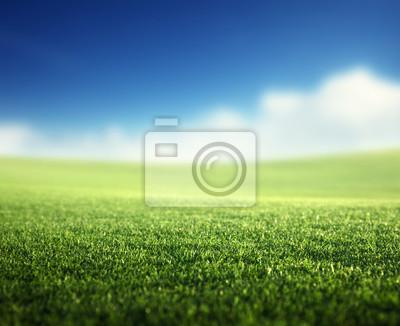 field of spring grass (shallow DOF)