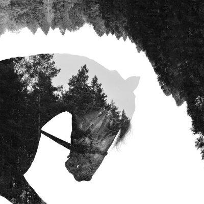 Wall mural Fir forest inside the horse in art,  multiexposition
