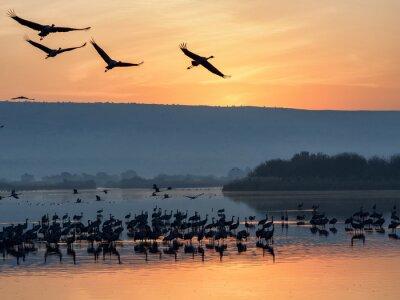 First awakening birds