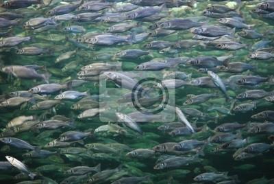 Wall mural Fish 1