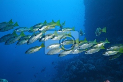 Wall mural fish