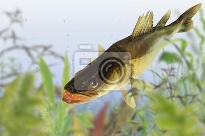 Wall mural fish 63