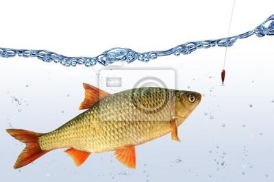 Wall mural fish 67