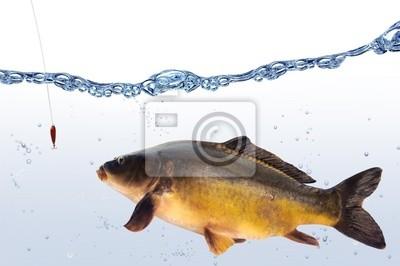 Wall mural fish 68