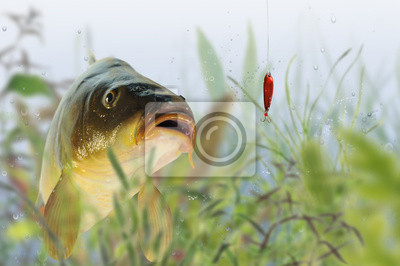 Wall mural fish 76