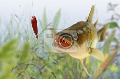Wall mural fish 77