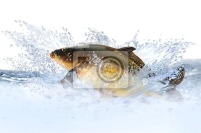 Wall mural fish 9
