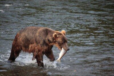 Wall mural fishing bear