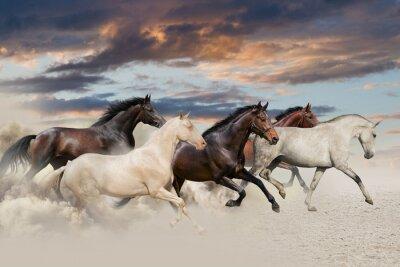 Five horse run gallop in desert at sunset