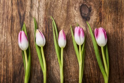 Wall mural five pink tulips on wooden background