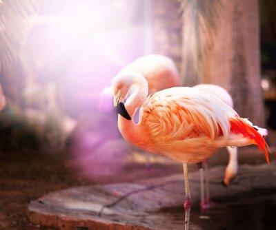 Wall mural flamingo