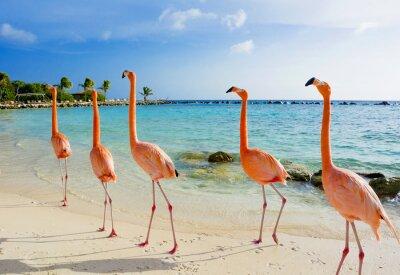 Wall mural Flamingo on the beach, Aruba island