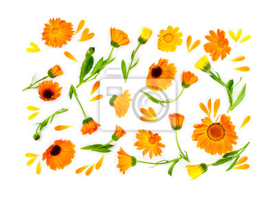 Flat lay composition with flowers calendula isolated on white ba